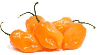chile-habanero